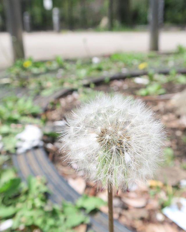 輝いているよ。 「生きるのが楽になる!ホリスティック氣幸」http://holistic-kikou.com