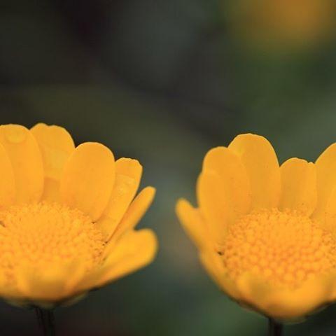 仲良しこよし 「生きるのが楽になる!ホリスティック氣幸」http://holistic-kikou.com