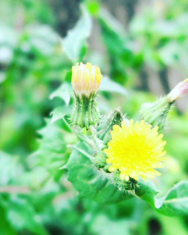 咲かそうとするのではなく自然と咲く。そんな大自然、命の働きを信じて生きる。#花 「生きるのが楽になる!ホリスティック氣幸」http://holistic-kikou.com無料メールマガジンhttps://main-holistic-kikou.ssl-lolipop.jp/mailmag/form/