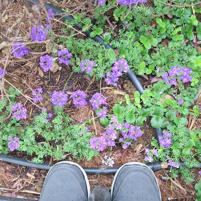 足元のお花ちゃん達踏まないように。#お花